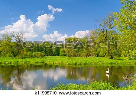 Stock Photography of Beautiful landscape with swan in the flood.