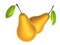 Asian Pear Stock Illustrations.