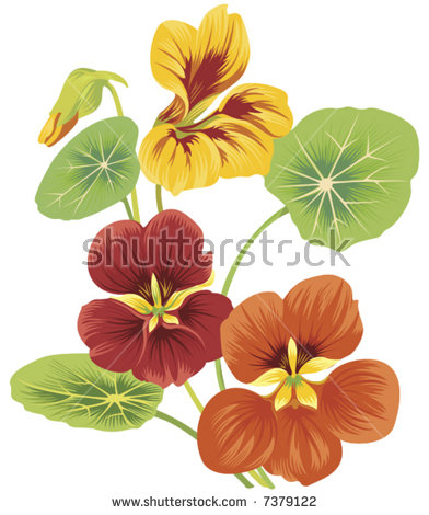 Vector Images, Illustrations and Cliparts: isolated flower of.