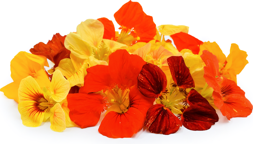 Nasturtiums Flowers Information, Recipes and Facts.