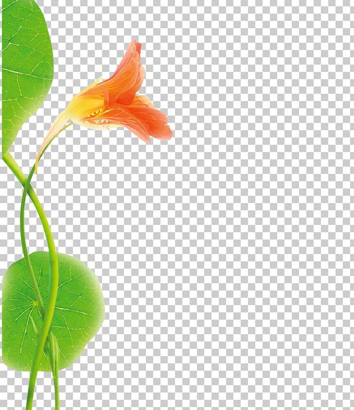 Garden Nasturtium Scalp Dandruff Flower Hair Care PNG.
