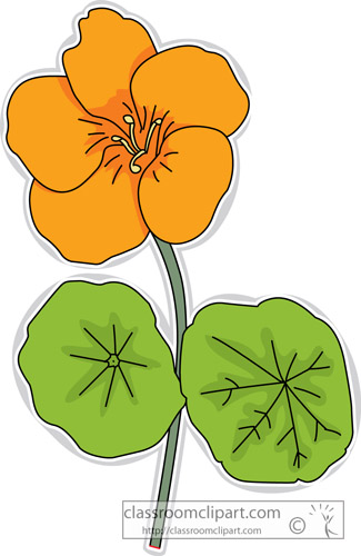 Gallery For > Nasturtium Flower Clipart.