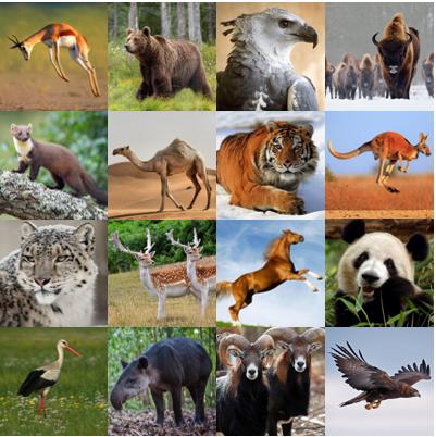 National Animals V Quiz.