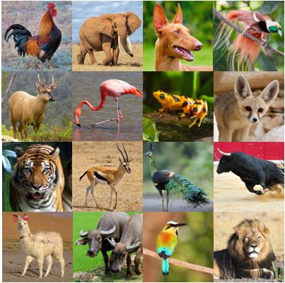 National Animals I Quiz.