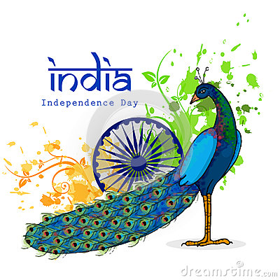 Indian National Bird Peacock Stock Illustrations.