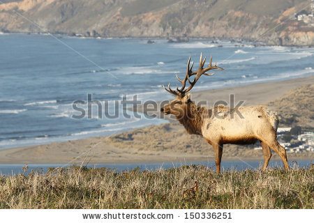 "point Reyes National Seashore"" Stock Photos, Royalty."