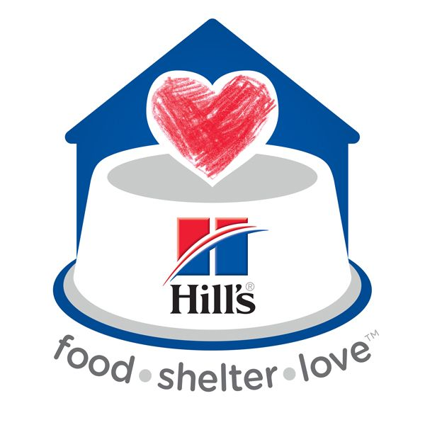 1000+ Ideen zu Shelter For Homeless auf Pinterest.