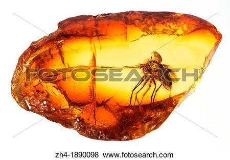 Pictures of Prehistoric fly preserved in Baltic amber zh4.