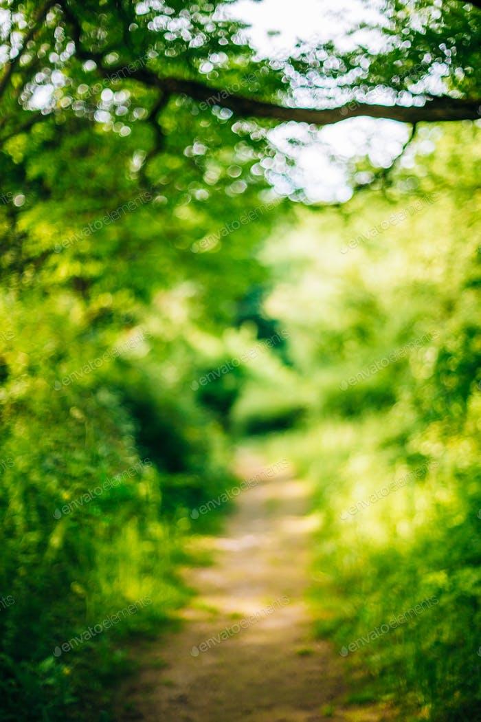 Download Free png Blurred Abstract Bokeh Boke Natural.