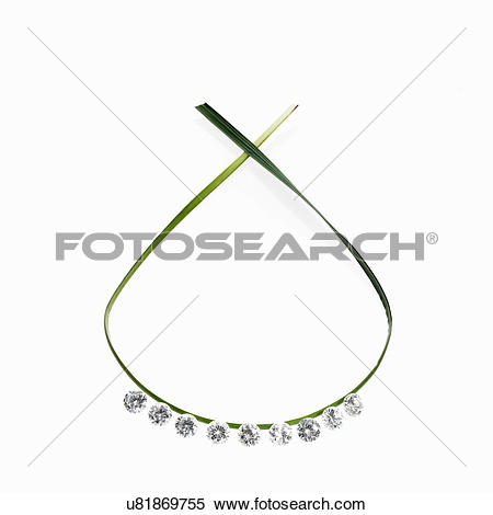 Stock Image of A thin green strap leaf in a loop with small.
