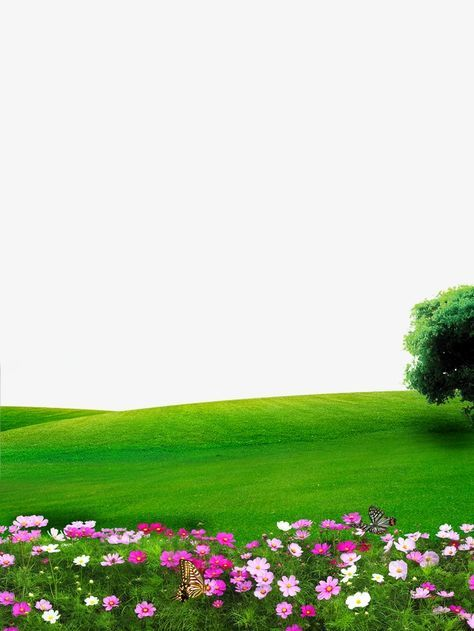 Nature, Flowers, Lawn PNG Transparent Image and Clipart for.