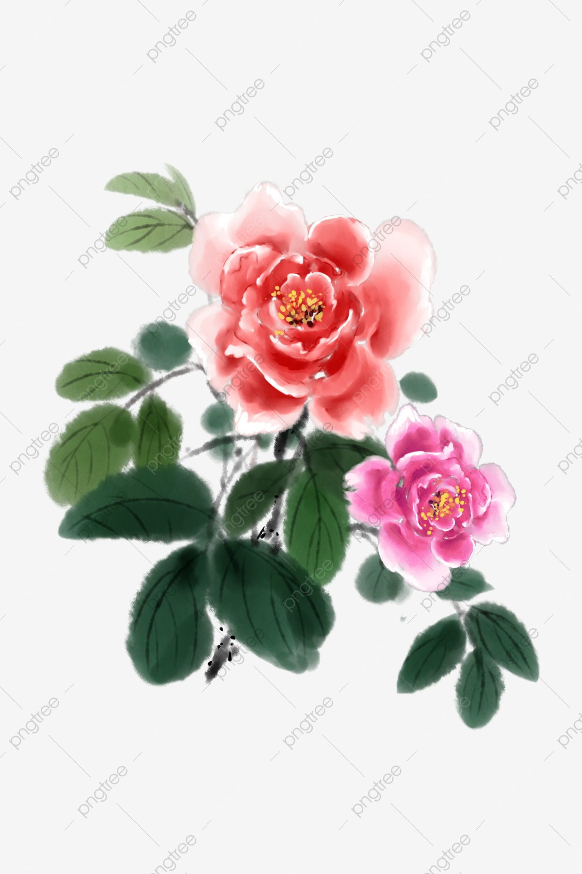 Peony Flowers Pink Natural, Spring, Peony, Peony Flower PNG.