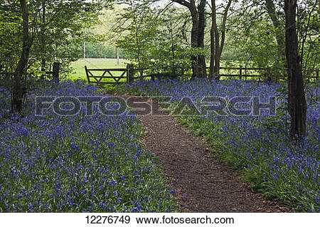 Stock Photograph of The gate out of the bluebell woods.