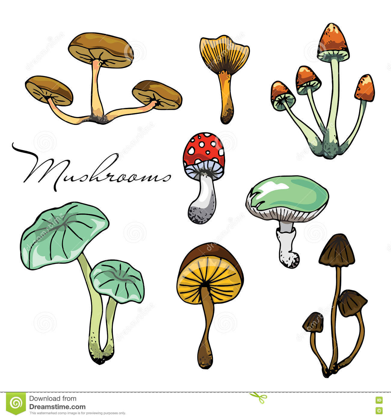 Nature Illustration. Natural Materials. Forest Postcard. Assorted.
