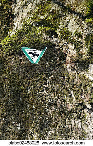"""Stock Image of """"Natural monument sign on a Lime (Tilia) in."""
