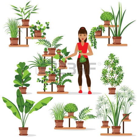987,047 Plant Stock Vector Illustration And Royalty Free Plant Clipart.