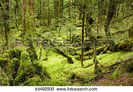 Stock Photography of Primeval forest k5492930.
