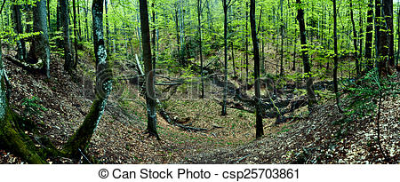 Stock Image of Primeval beech forest on broders between Slovakia.