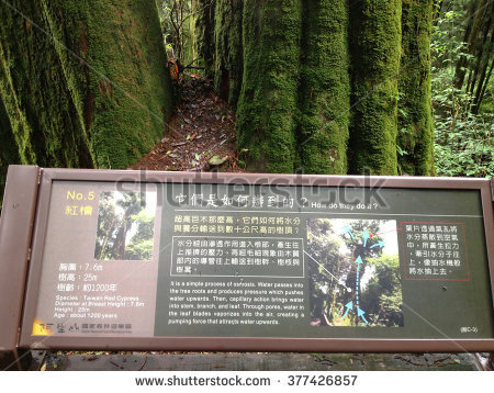 Taiwan Red Cypress Stock Photos, Images, & Pictures.