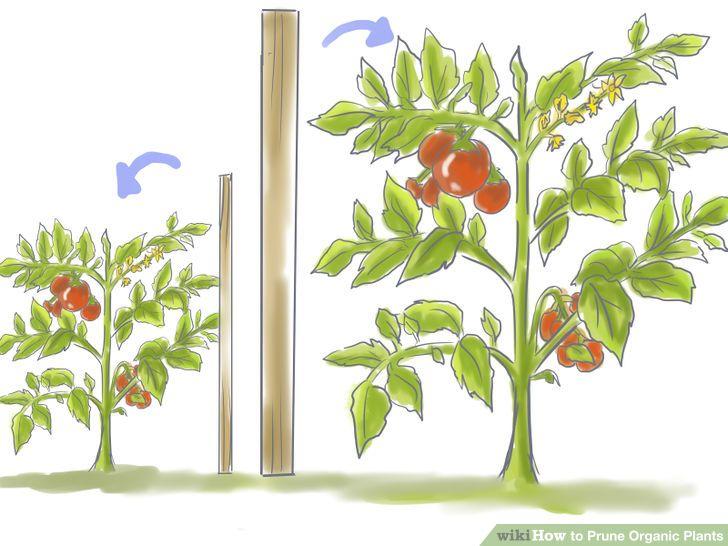 4 Ways to Prune Organic Plants.