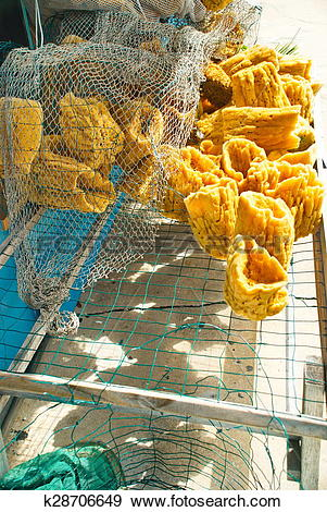 Stock Photograph of Natural Sea Sponges k28706649.