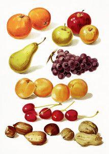 cherry clip art, cherry leaf and fruit, vintage botanical fruit.