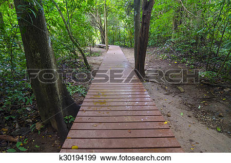 Stock Photograph of Wooden boardwalk with safety railing in summer.
