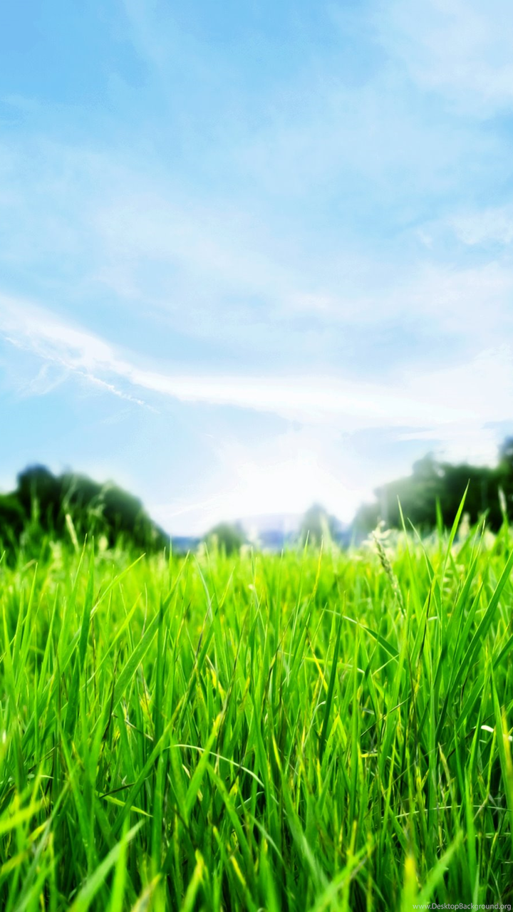 Png Nature Background Hd.