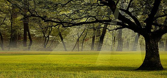 Nature Background Background Photos, Nat #188857.
