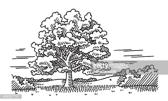 Single Tree Summer Nature Drawing Vector Art.