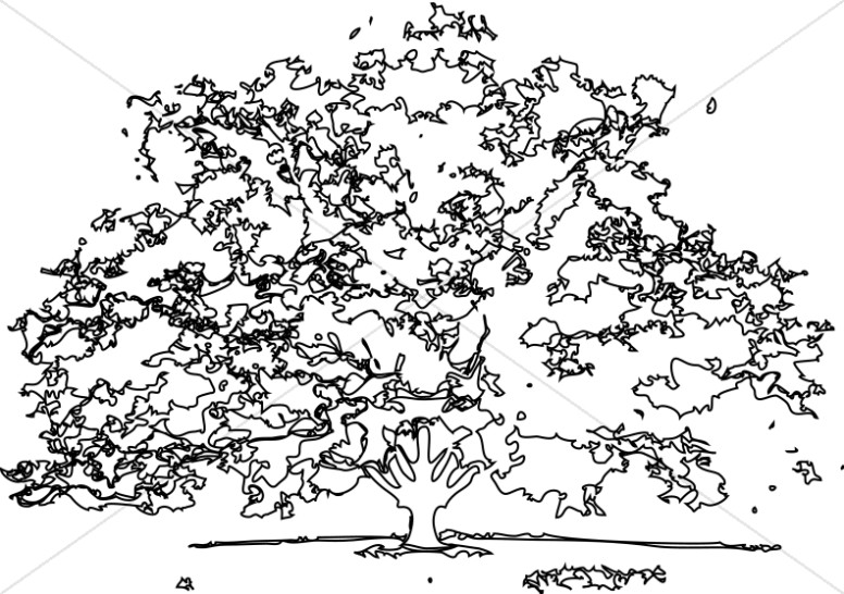 Black and White outline Maple Tree.