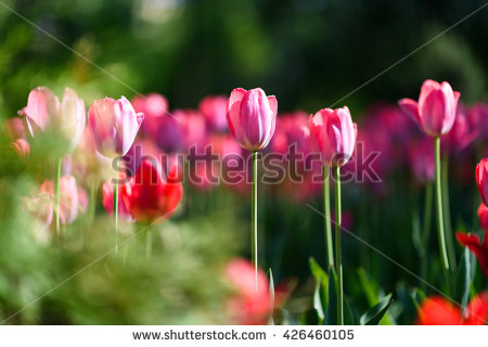 Nature Stock Images, Royalty.