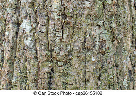 Stock Photography of Close up view of highly detailed tree bark.