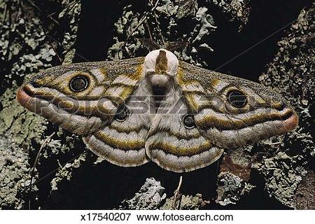 Picture of Nature, Camouflage, Moth, Insect, Close Up, Animal.