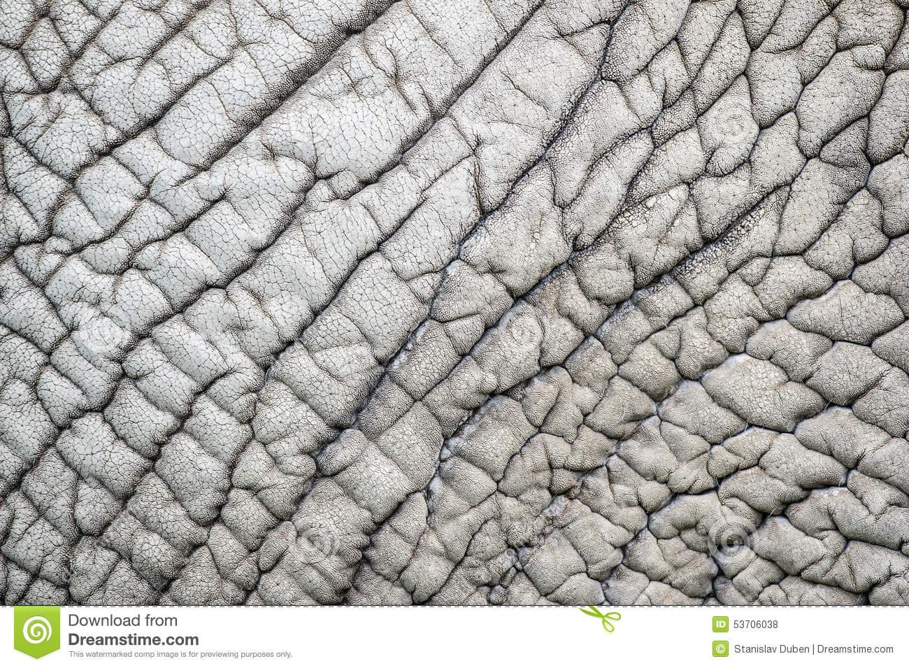 Elephant Skin Nature Pattern Stock Photo.