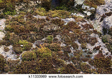 Stock Photograph of View of moss and lichen plants on a old.