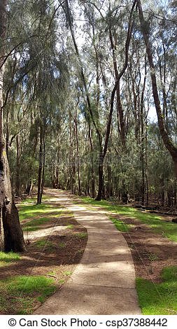 Stock Photo of Concrete pathway in forest of ironwood trees in.