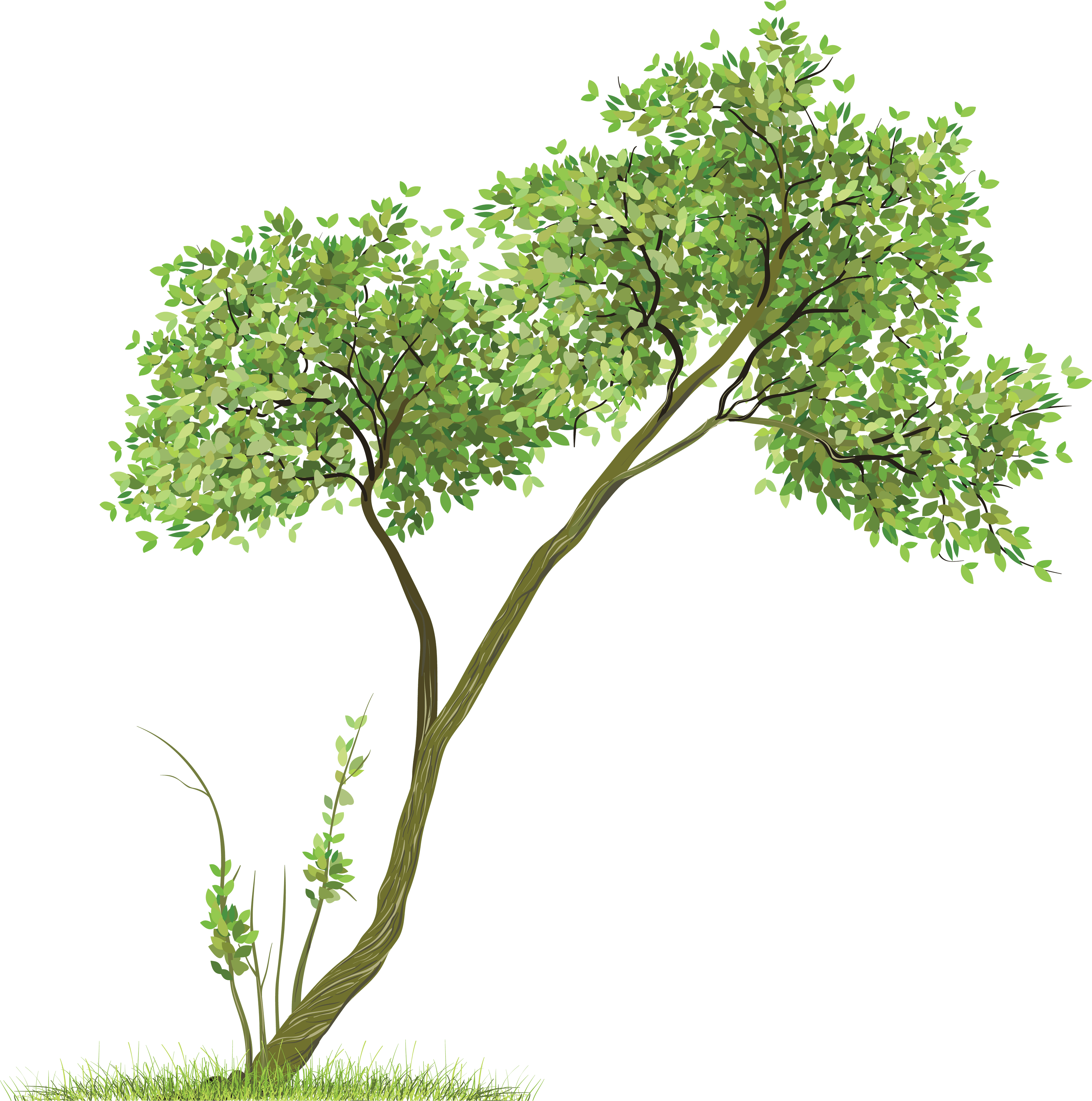 Download Tree Png Image HQ PNG Image.