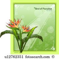 Bird paradise flower Illustrations and Clip Art. 173 bird paradise.