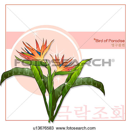 Drawing of korean characters, nature, bird of paradise, templet.