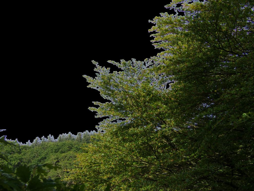 Nature PNG Images, Tree Png, Nature Logos Free Download.
