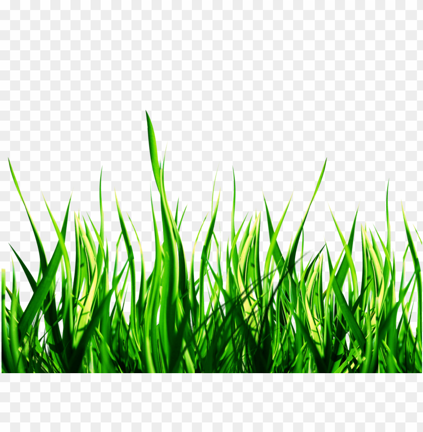 Download nature png images background.