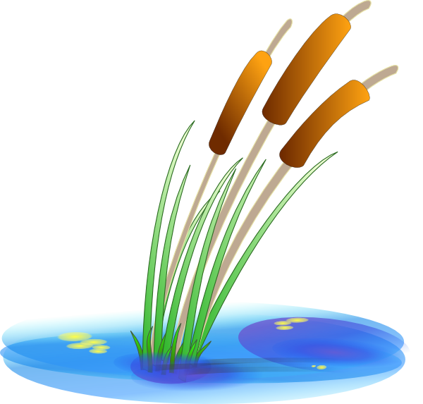 Reed clip art Free Vector / 4Vector.