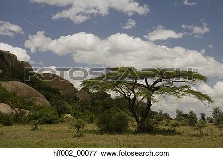 Nature serengeti clipart #14