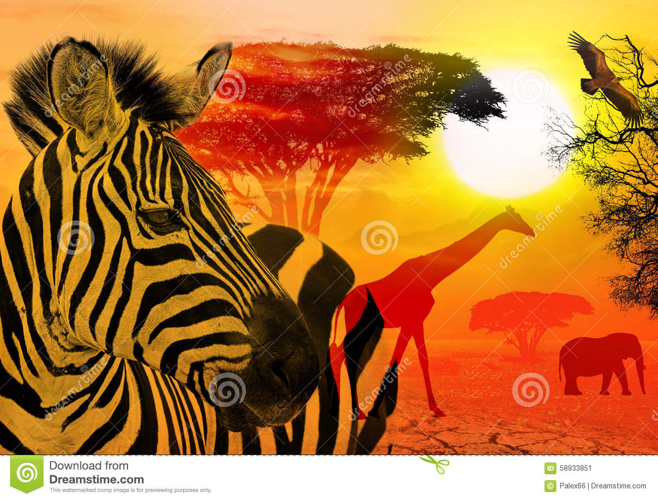 Serengeti Stock Illustrations.