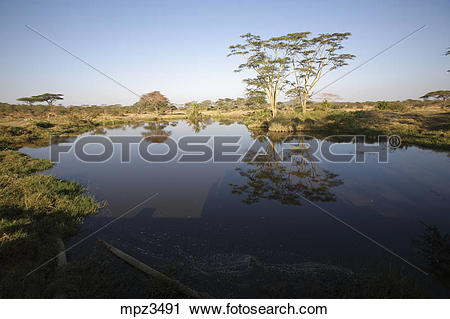 Stock Photography of Pond of water in the Serengeti National Park.