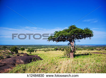 Stock Photography of Savanna landscape in Africa, Serengeti.