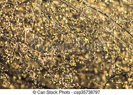 Stock Photographs of Dried plant close up in the winter.