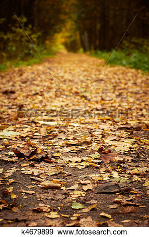 Stock Photograph of Forest path at autumn season. Defocused shot.