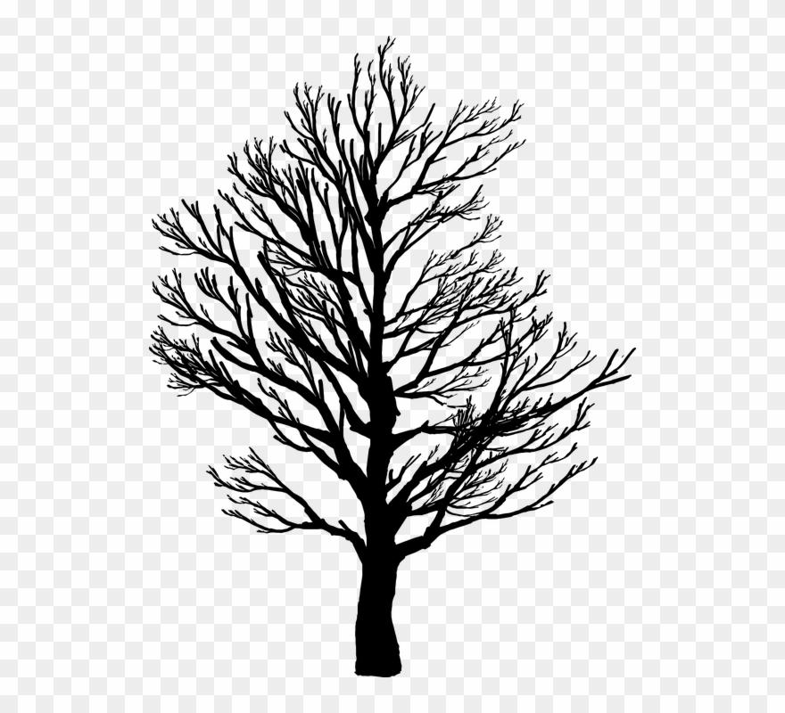 Barren, Branches, Nature, Plant, Plants, Silhouette.